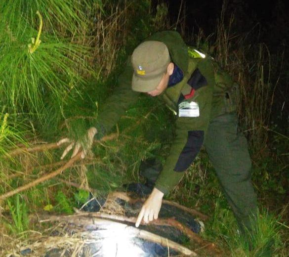 "Gendarmería incautó casi 100kg de ""Marihuana Selvática"""