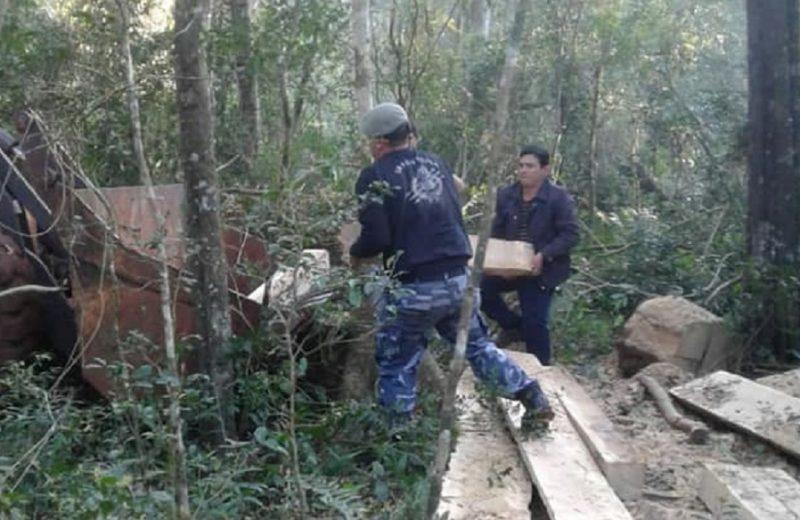 Evitaron la comercialización de madera producto de apeo ilegal