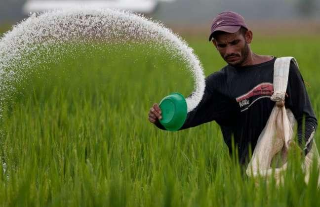La fertilización con zinc puede ser clave en la lucha contra la desnutrición