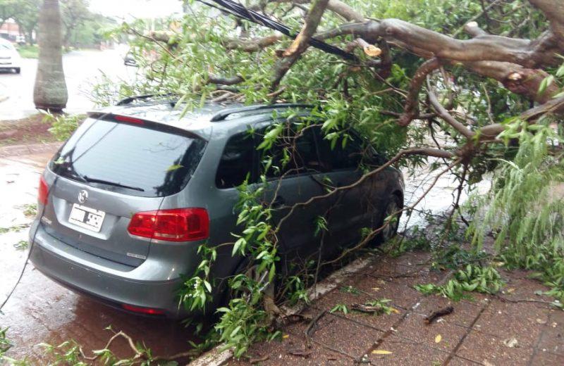 Temporal en la ciudad de las cataratas provocó caída árboles y postes