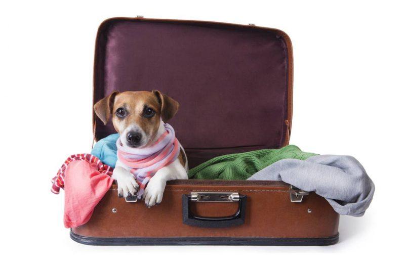 Día del animal: tips para viajar con tu mascota