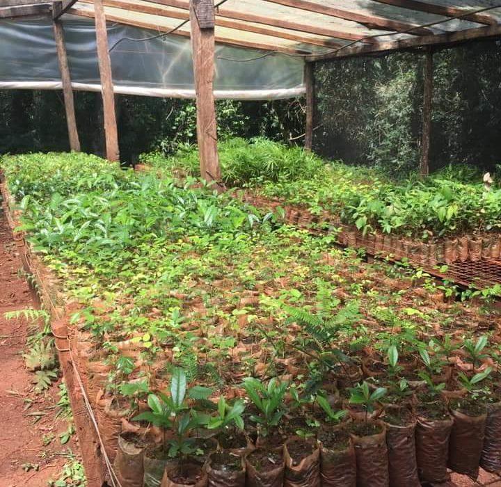 Vida silvestre donó 200 plantines para reforestar el sector afectado por el incendio
