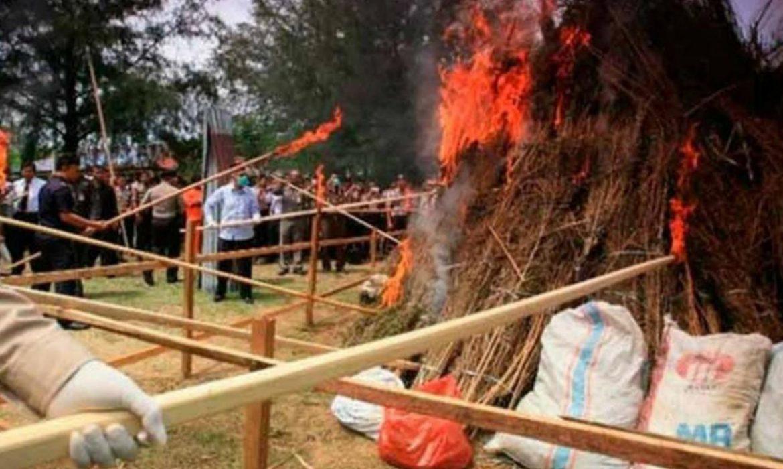Indonesia: quemaron tres toneladas de marihuana y drogaron a todo un pueblo