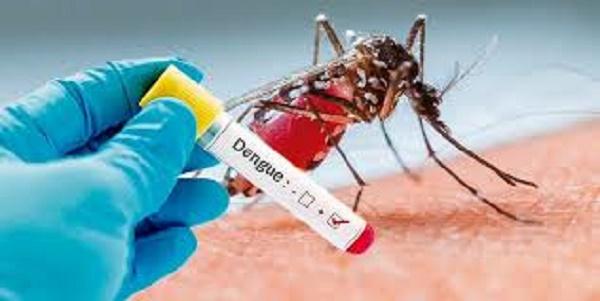 Dengue: El Ministerio de salud confirmó 237 casos