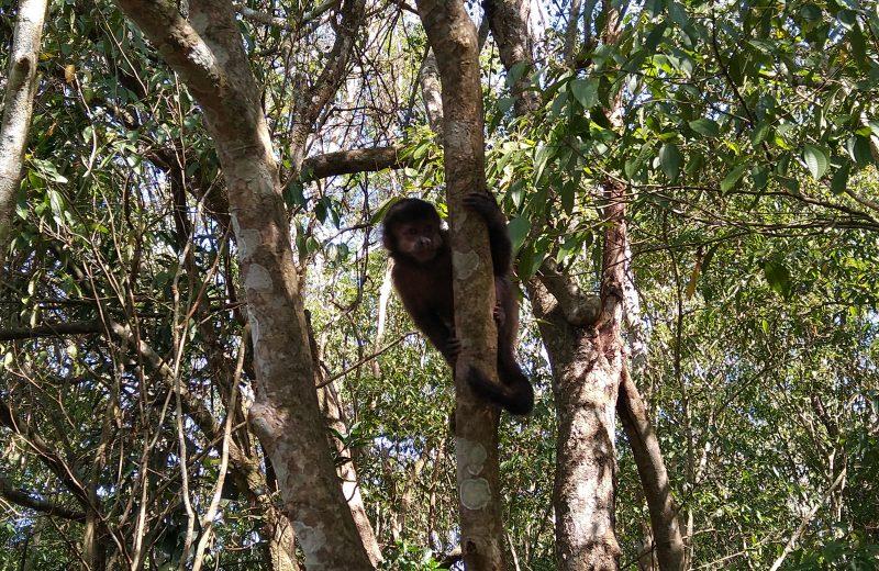 La fauna del Parque Nacional Iguazú vuelve a sus raíces durante la pandemia