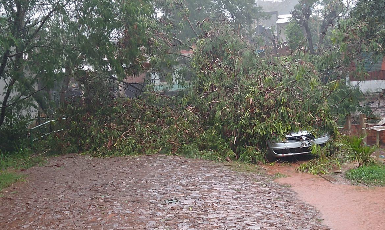 Temporal dejó árboles y postes caídos, la ciudad está sin energía eléctrica