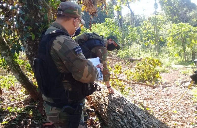 Policía en Defensa del Medio Ambiente frustró continuidad de apeo ilegal
