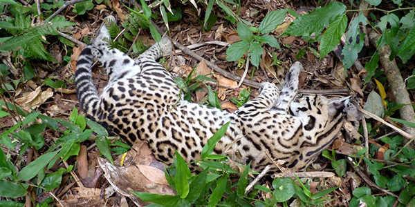 Más de 3000 animales mueren atropellados en Misiones y buscan generar conciencia