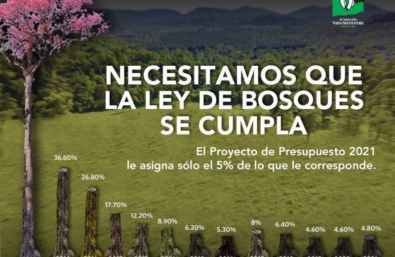 El Proyecto de Presupuesto Nacional contempla solo el 4,8% de lo que le correspondería a la Ley de Bosques