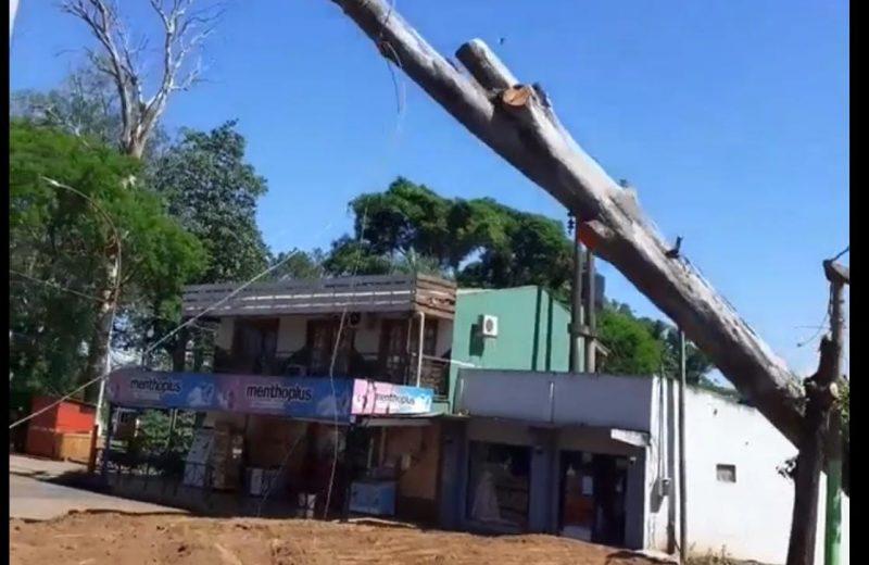 Finalizaron la extracción del eucalipto que obstruía una calle