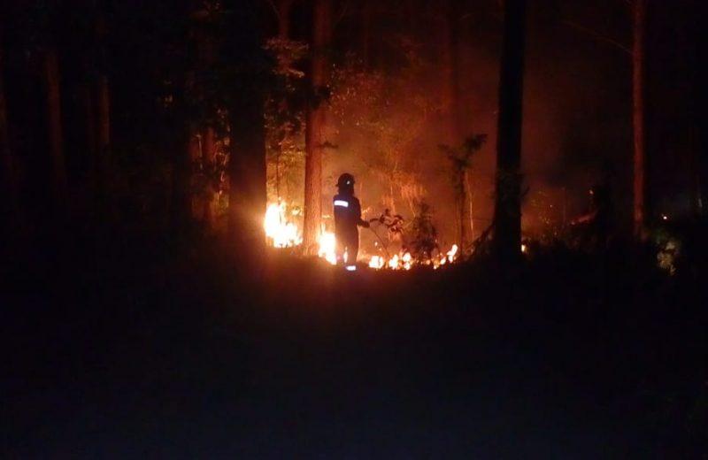 Bomberos Voluntarios de Iguazú acudieron a un incendio forestal en un pinar en Eldorado