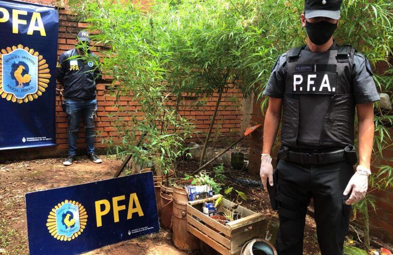 Allanaron una vivienda, secuestraron semillas y plantas de marihuana