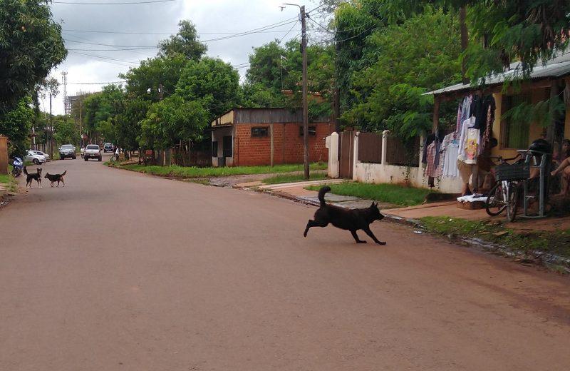 Tenencia Responsable: Preocupa el aumento de la cantidad de perros en la vía pública