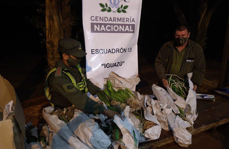 Gendarmería incautó 86 orquídeas exóticas