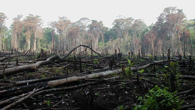 Crisis ambiental: cada vez más personas se preocupan por la pérdida de naturaleza en el mundo