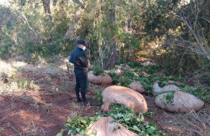 Atraparon a dos hombres en pleno robo de yerba mate en Puerto Libertad