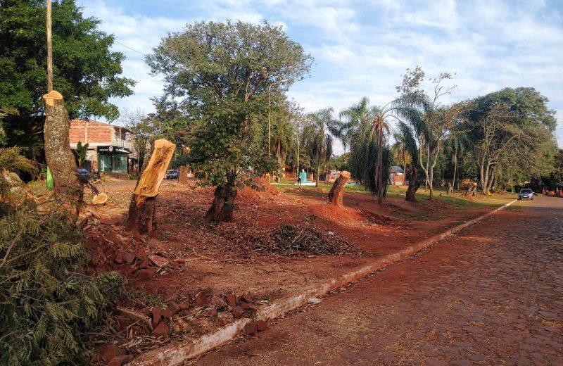 Vecinos denuncian la tala indiscriminada de árboles en la plaza Eva Perón