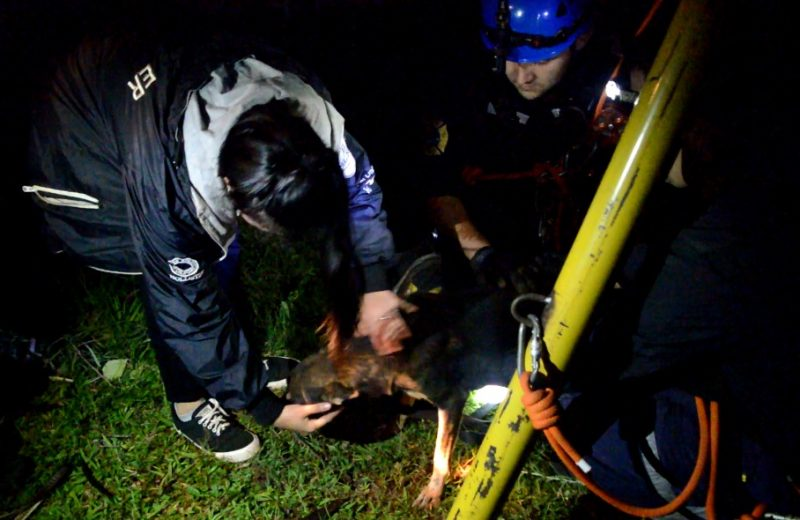 Rescataron a un perro de un pozo de 17 metros