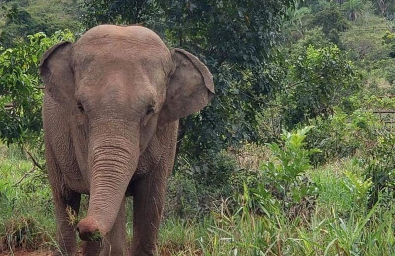 Mara se adapta a su nuevo hogar el Santuario de elefantes