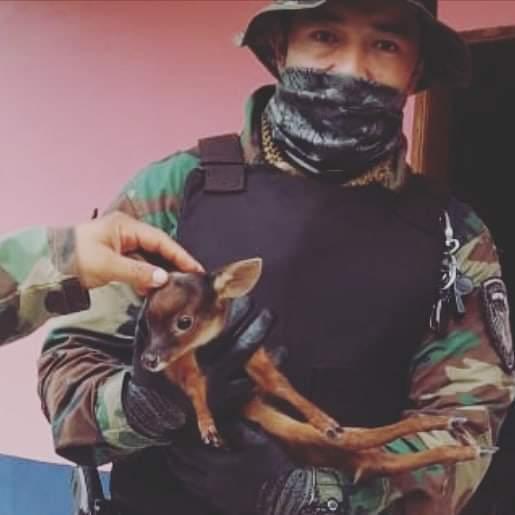 Rescataron a un venado en una vivienda de Comandante Andresito