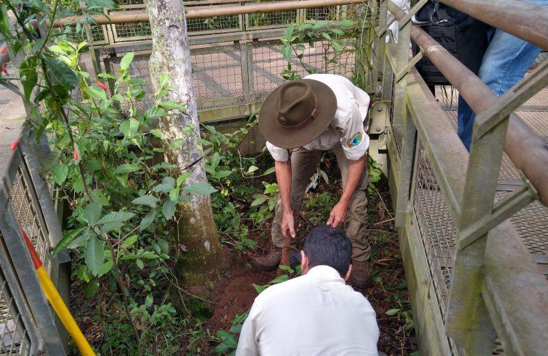 Plantarán 30 mil árboles en memoria de los desaparecidos de la dictadura y comenzaron en el Parque Nacional Iguazú