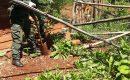 Gendarmería incautó 65 plantas de marihuana en el Paraje 2.000 hectáreas