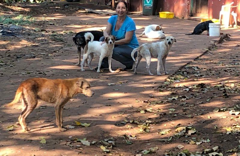 La asociación Patas a la Obra alimenta a 100 perros y rescata animales casi todos los días